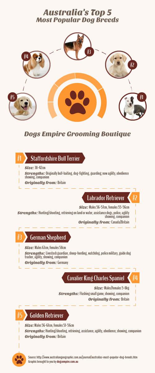 dogsempire-infographic
