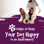 Dog Living in Apartment Infographic