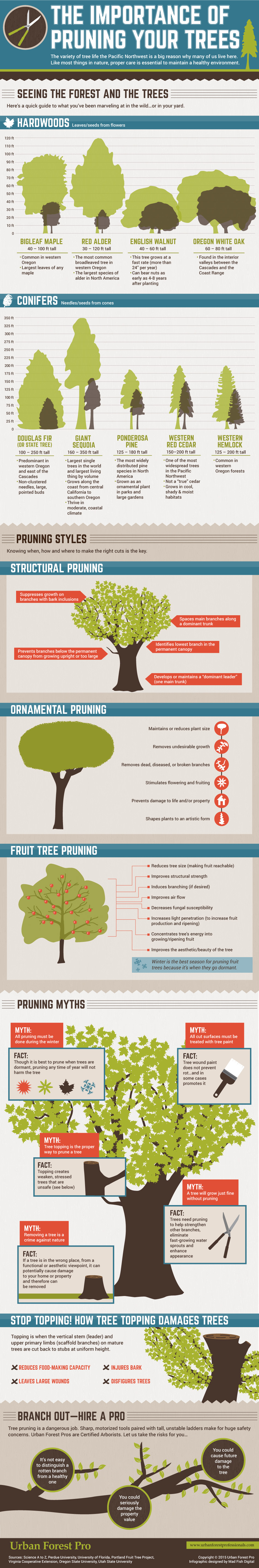 Tree pruning infographic
