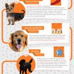 dog breed health infographic