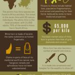 Rhino extinction infographic