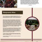 Wine Making infographic