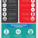 trampoline infographic