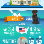 Pet shelter infographic