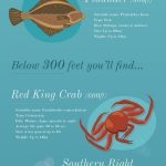 under the sea infographic